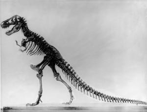 Tyranosaurus skeleton