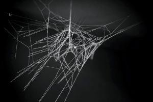 spider web carbon